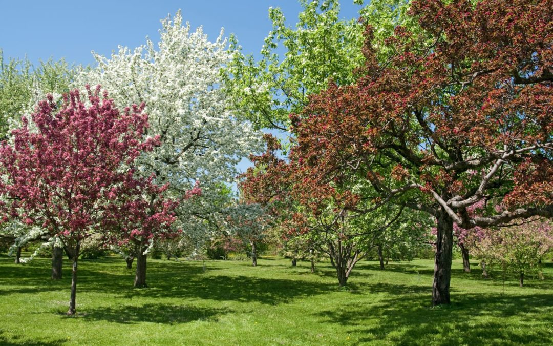 spring trees for prospect blog