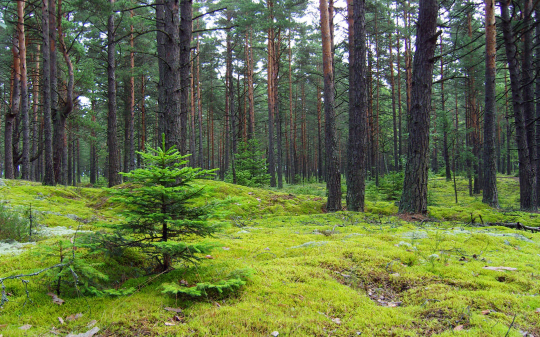 Corporate Fundraising: Lessons from Industry Leaders